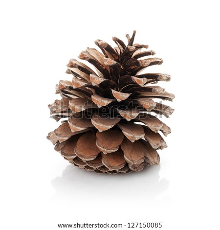 Opened cedar cone isolated on white - stock photo
