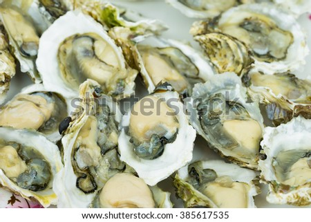 Opened Fresh Shucked Oysters ready for eating - stock photo