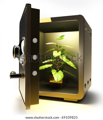 Opened golden safe with Flower in a pot  isolated on white 3D render