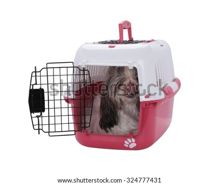 Opened pet travel plastic carrier with shih Tzu dog inside. This has clipping path. - stock photo