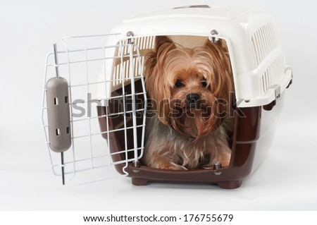 Opened pet travel plastic carrier with Yorkshire Terrier inside - stock photo