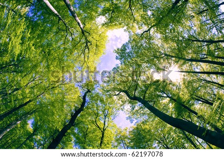 Opening between branches - stock photo