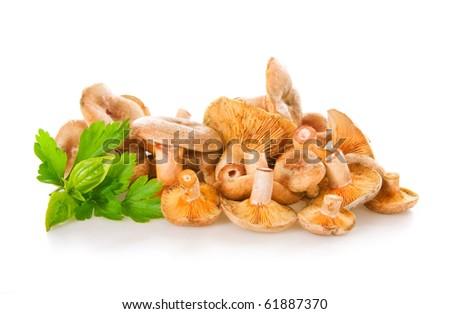 orange agarics (Lactarius deliciosus) on white - stock photo