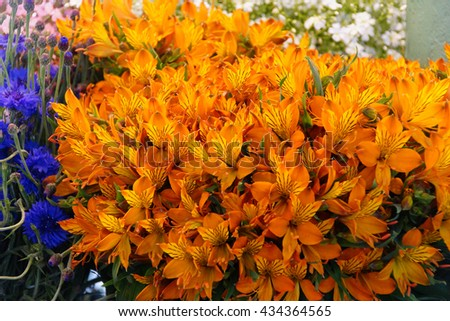 Orange alstroemeria bouquets for sale at the Pike Place Public Market , Seattle - stock photo