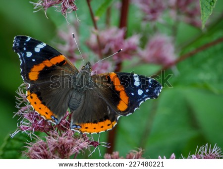 Orange and black moth on a flowering plant with green background - stock photo