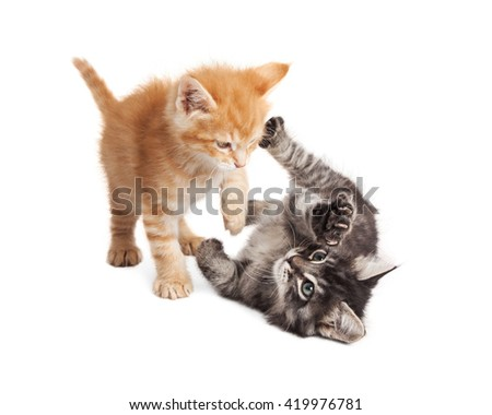 Orange and black tabby kittens playing together on white - stock photo