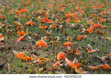 Orange and dried palas flowers on green grass