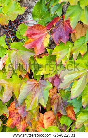 orange and green leaves on a old stone wall - stock photo