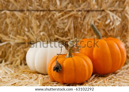 Orange and White pumpkins against a straw bale in soft focus with room for text or copy - stock photo