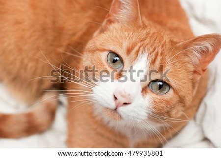 Orange and white Tabby cat with green eyes looking at camera.