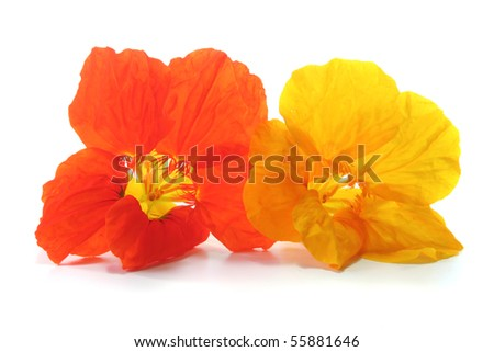orange and yellow nasturtium with leafs on a white background