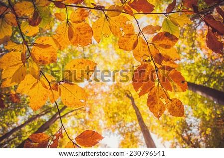 Orange autumn. - stock photo