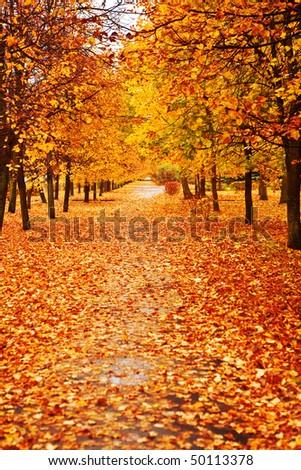 orange autumn alley - stock photo