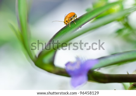 orange beetle  and violet flower in green nature or the garden