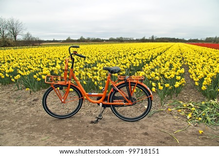 Orange bicycle from Holland at the flower fields in the Netherlands - stock photo