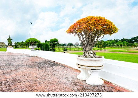 Orange bonsai in park  - stock photo