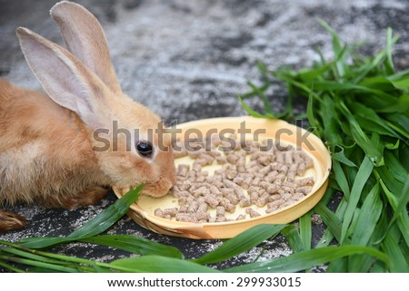 Orange brown rabbit is eating rabbit feed and grass.Professional dry pet food spread out in a plate with green grass - stock photo