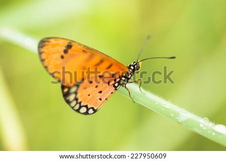 Orange butterfly in green field - stock photo