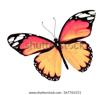 Orange butterfly, isolated on white background - stock photo