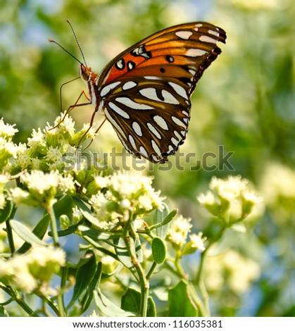 Orange Butterfly on Flower - stock photo