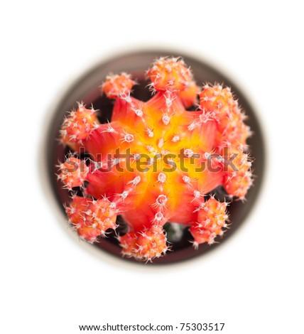 Orange cactus closeup - stock photo