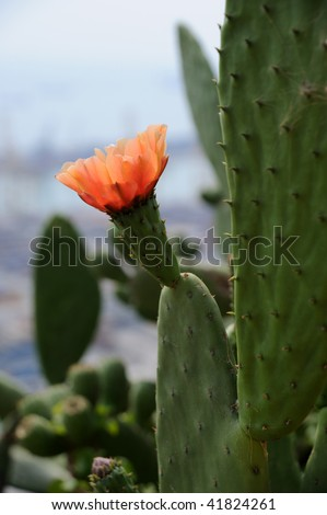 orange cactus flower against grey sky - stock photo