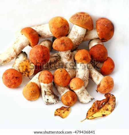 Orange-cap boletus mushrooms on a white background