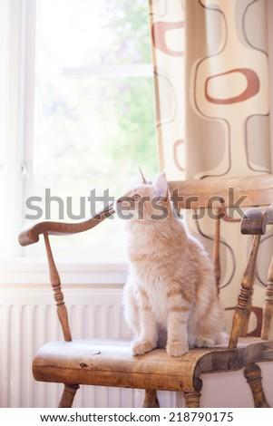 orange cat  - stock photo