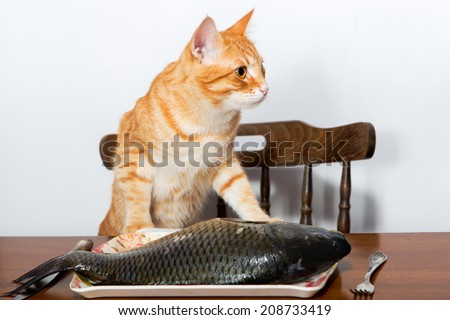 Orange cat and a big fish on a plate - stock photo