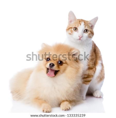 orange cat and dog. dog looking at camera. isolated on white background - stock photo