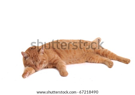 Orange cat is having a nap comfortably lying isolated on white background - stock photo