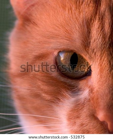 Orange Cat, portrait of right half of its face - stock photo
