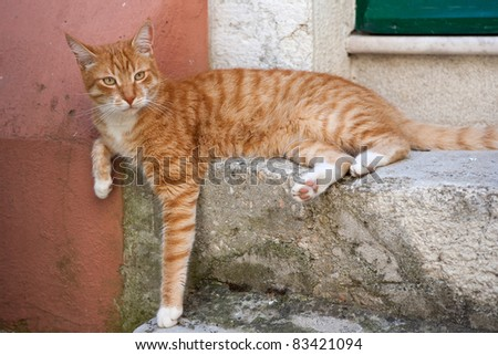 Orange cat resting on a mediterranean street - stock photo
