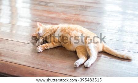 Orange cat sleeping - stock photo