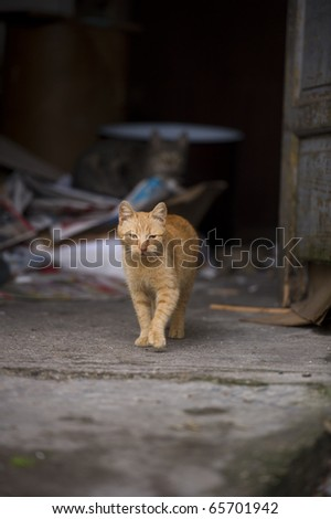 Orange cat walking toward the camera - stock photo
