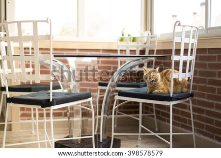 Orange cat yawning in chair - stock photo