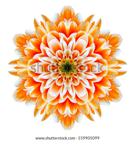 Orange Chrysanthemum Mandala Flower Kaleidoscope Isolated on White Background