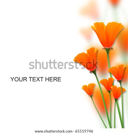 orange color flowers on white space for messages