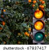orange color on the traffic light with a orange tree in background - stock photo