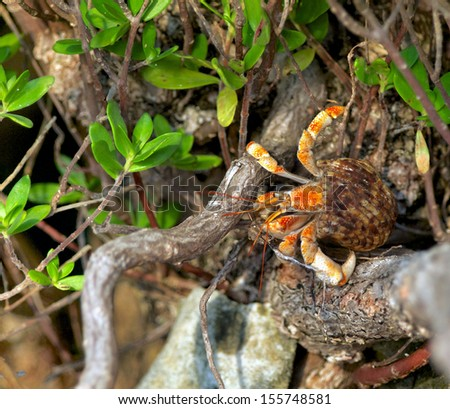 Orange Crab Between Plants in Natural Environment