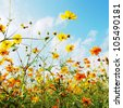 orange daisy in front of blue sky with flowers - stock photo