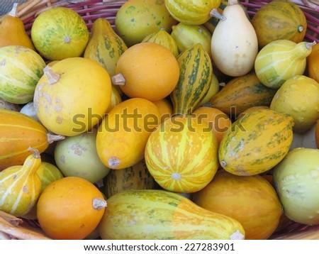 orange decorative gourds for halloween party - stock photo