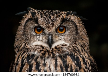 Orange eyed brown eagle own (Bubo bubo) portrait on dark background - stock photo