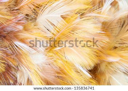 Orange Feathers Background - stock photo