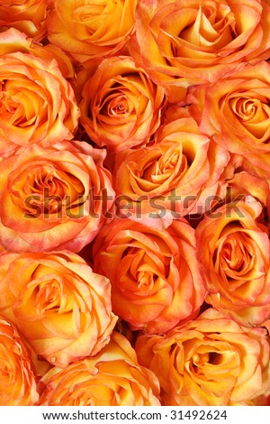 Orange floral background pattern. Beautiful orange roses. - stock photo