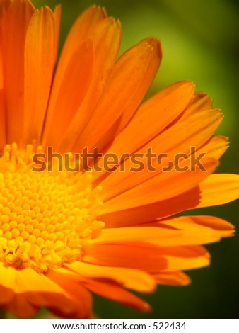 Orange flower still life - very soft focus