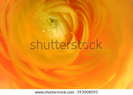 orange flower waterdrops