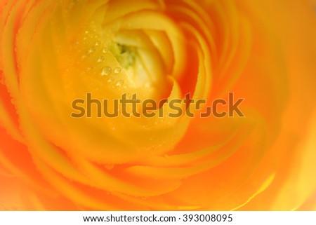 orange flower waterdrops - stock photo