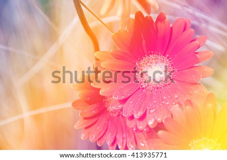 Orange flower with waterdrop on petals and pastel color gradient background - stock photo