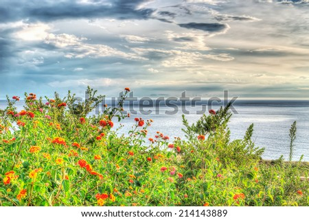 orange flowers by the sea. hdr tone mapping - stock photo